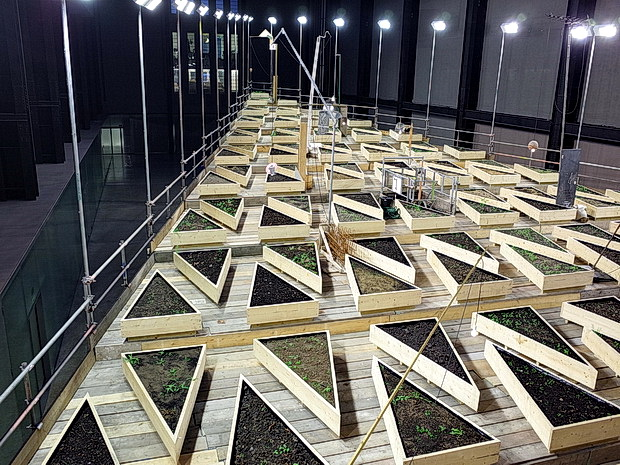 Abraham Cruzvillegas: Empty Lot. A bit like watching paint dry. Or weeds grow. Turbine Hall, Tate Modern, London