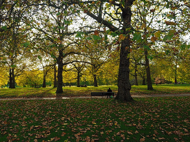Autumn in London: the reds, yellows and browns of Green Park and St James's Park, October 2015