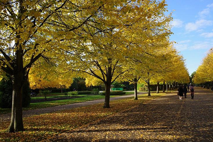 The astonishing beauty of Regent's Park in autumn - twenty photos, October 2020