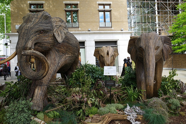 In photos: the elephant herds of Chelsea