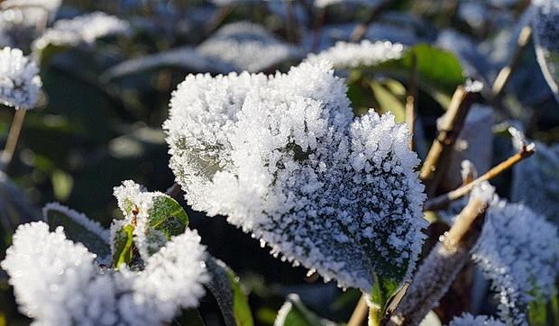 Frosty scenes across Germany 13 photos