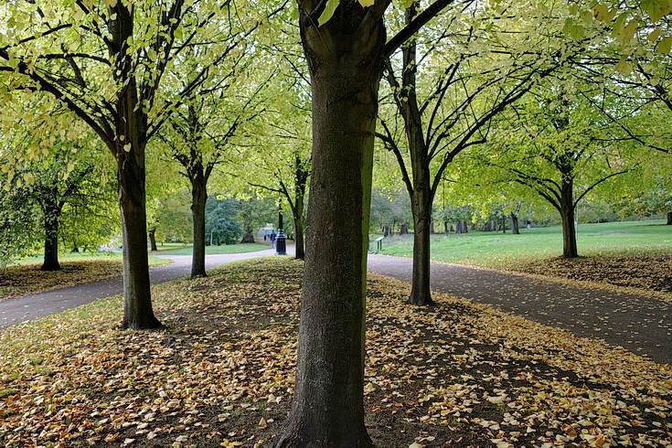 Autumn takes over in London's Green Park- 18 photos shot with Ricoh GRiii camera
