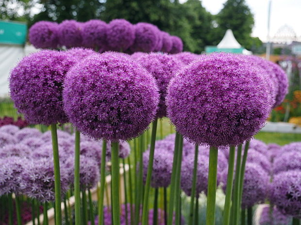 More photos from the RHS Hampton Court Palace Flower Show 2014, Hampton Court, London, July 2014