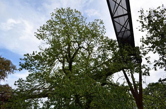 Kew Gardens Treetop walkway - wobbly, but fun