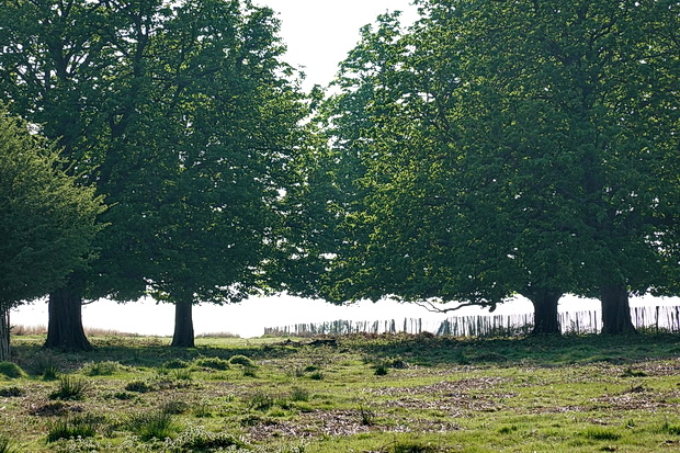 In photos: Deer, trees, lakes and sunshine: a day out in Richmond and Richmond Park, London