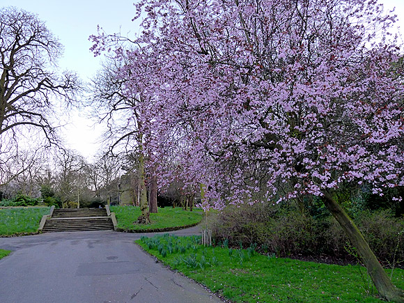 Ruskin Park in the spring, south London