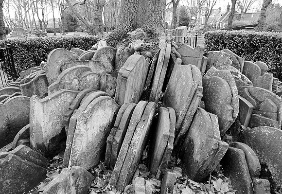 hardy-tree-st-pancras-churchyard-1