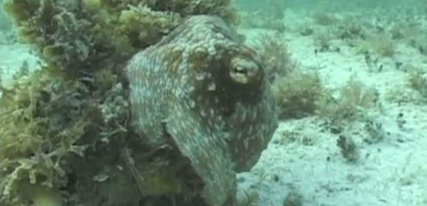 Here's why Octopuses are some of the coolest creatures on the planet