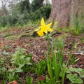 A hint of spring in Ruskin Park, Lambeth, south London