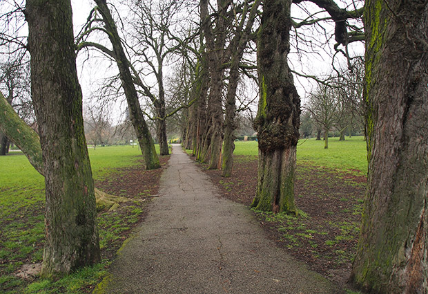 Spring struggles to burst through at Ruskin Park