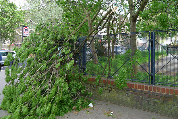 Tree branches crash down in breezy Coldharbour Lane, Brixton
