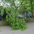 It was a breezy old day in Brixton yesterday, with several tree branches crashing down in the high winds.