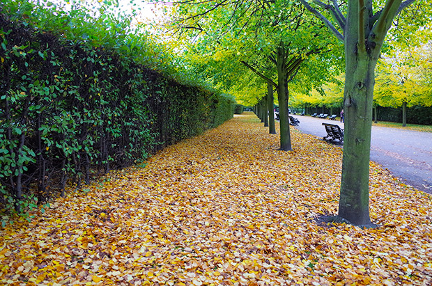 autumn-regents-park-london-01