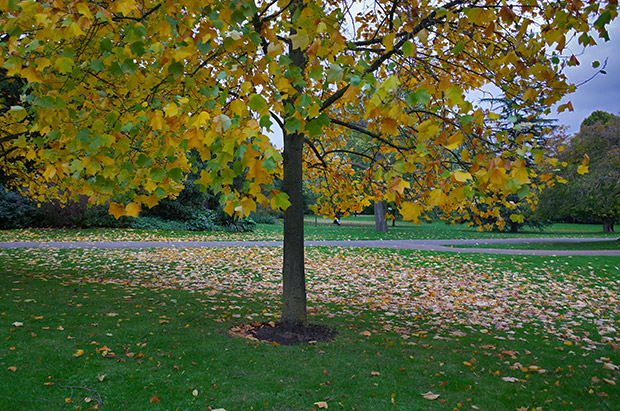 Autumn in Regent's Park, central London