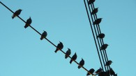 I'll agree it's most the most impressive arrangement of birds on a wire you're going to see, but there is something very pleasing about seeing birds all chirping away on […]