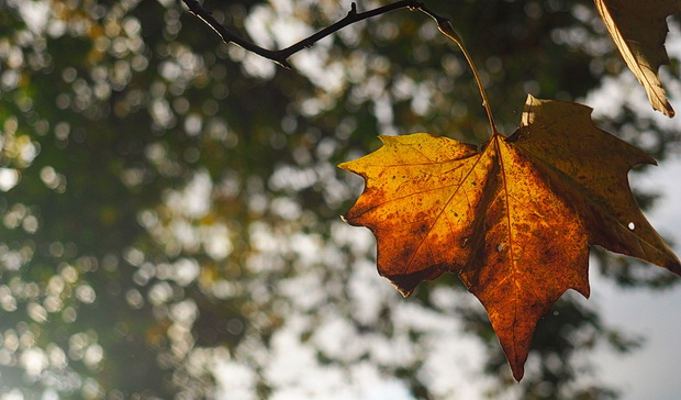 Autumn photos, London 2014