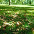 Although there's some confusion as to when Autumn actually starts – some say it's the beginning of September, others insist it's the Equinox – it's already easy to see the signs […]