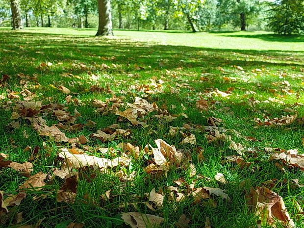 Autumn starts its grip on London
