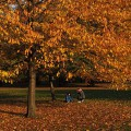 Autumn in London: the reds, yellows and browns of Green Park and St James' Park