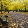 The astonishing beauty of Regent's Park in autumn - twenty photos, October 2020