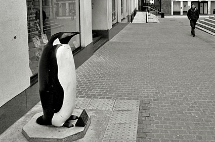 Penguin and passer by.