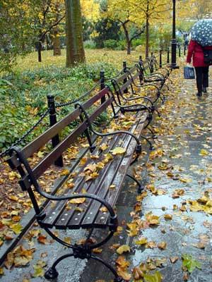 Autumn Leaves On A Park Bench City Hall Park Manhattan New York