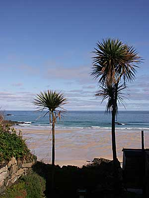 St Ives To Palm Beach